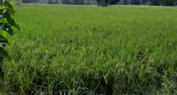 'Freedom to sell our produce': Farmers in J&K's Kathua laud agriculture bills