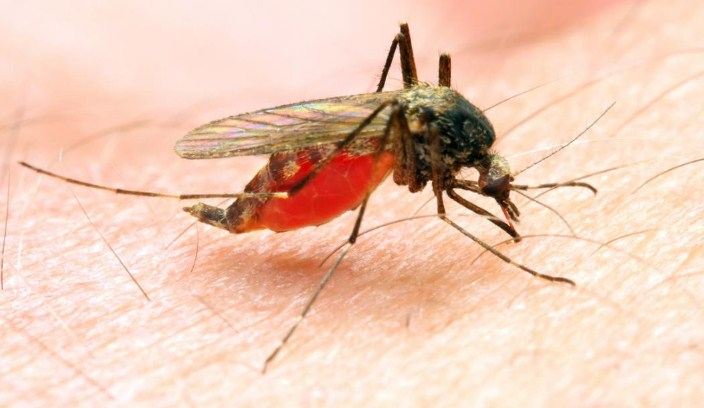 India recorded largest reductions in malaria cases in South-East Asia between 2000-2019: WHO